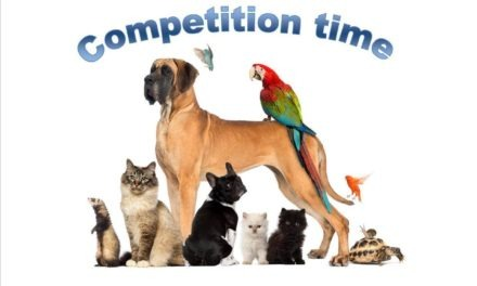JSPCA Competition: Behind The Scenes Tour On Offer!